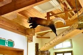 茶臼山動物園のレッサーパンダ舎
